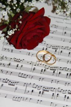 2 Gold Eternity Ring Near Red Rose on Musical Notes #37236