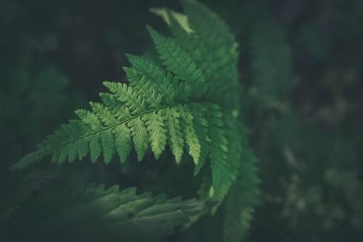 Fern Plant Leaf #372644