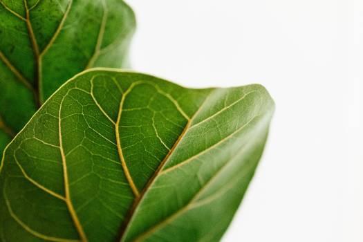 Leaf Plant Herb #372703
