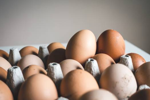 Egg Eggs Chicken Free Photo