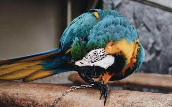 Macaw Parrot Bird #373086