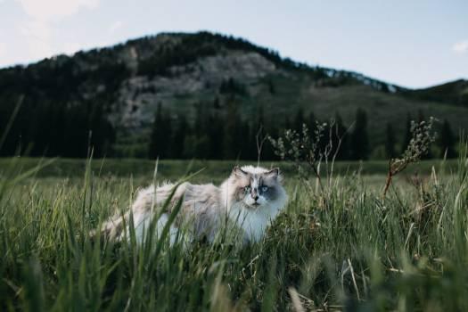 Lion Wilderness Feline #373301