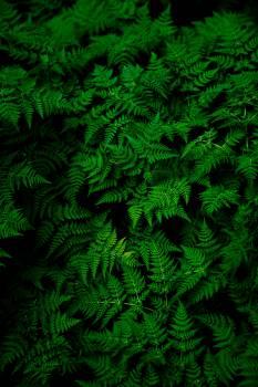 Fern Plant Pattern #373398