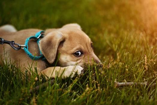 Dog Pet Canine #373567