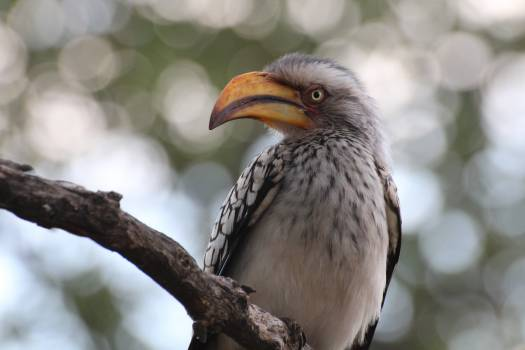 Bird Beak Wildlife Free Photo
