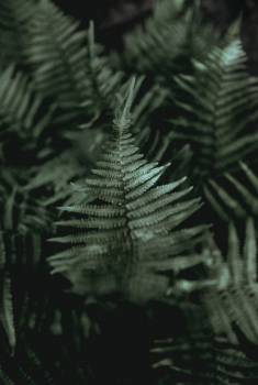 Fern Plant Forest #373815