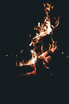 Blaze Caribou Light Free Photo