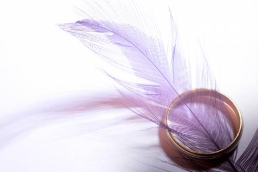 Wedding ring feathers closeup Free Photo