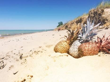 Sand Beach Ocean Free Photo