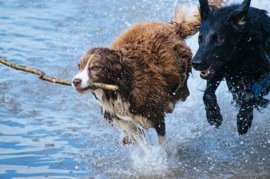 Brown and Grey Long Coat Dog With Black Short Coat Dog #37438