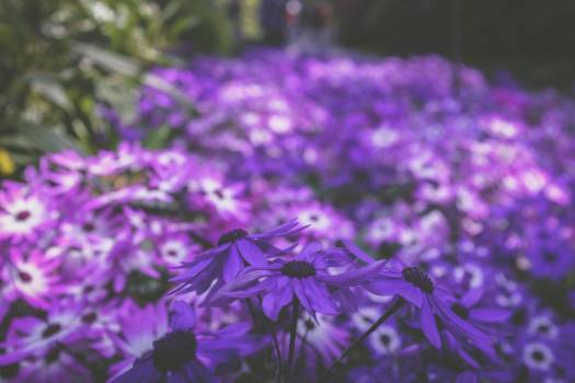 Herb Vascular plant Plant #374600