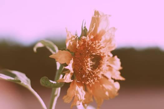Plant Flower Shrub #374668