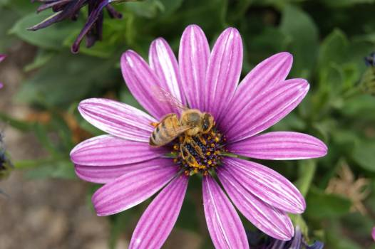 Petal Flower Daisy #374776