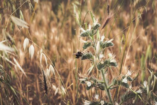 Wheat Plant Vascular plant #375158