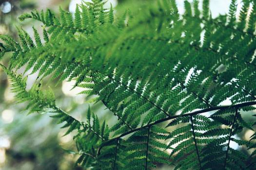 Fern Plant Forest #375231