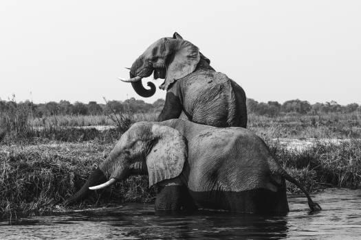 Elephant Mammal Safari #375271