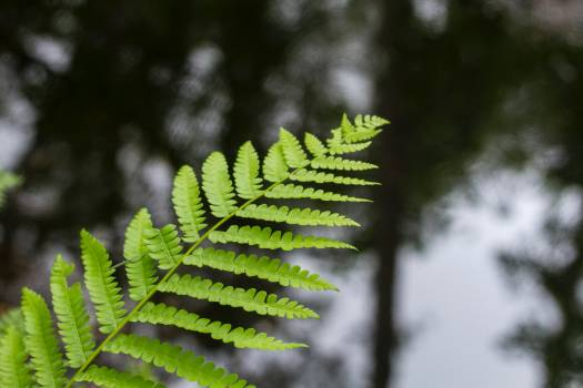 Fern Plant Forest #375339