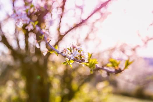Tree Pollen Spring Free Photo