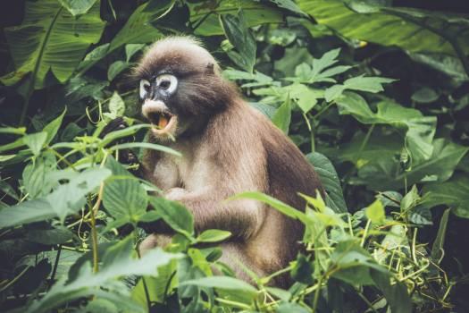 Monkey Ape Primate #376345