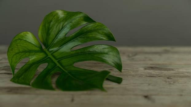 Plant Herb Leaf #376347