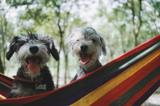 Terrier Dog Hunting dog #376466