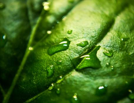 Close Up Photo a Water Moist Green Leaf #37655