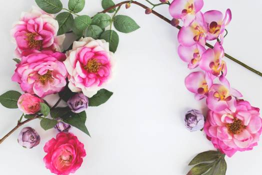 Pink Frame Flower Free Photo