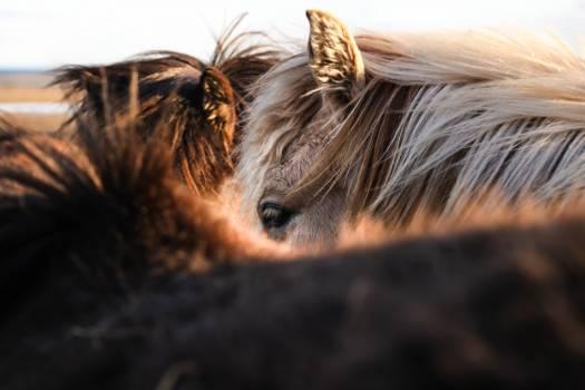 Horse Head Mammal #376700