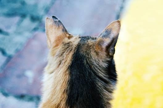Canine Wolf Fox #376730