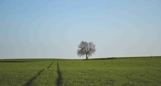 One Tree on a Green Grass Land Free Photo