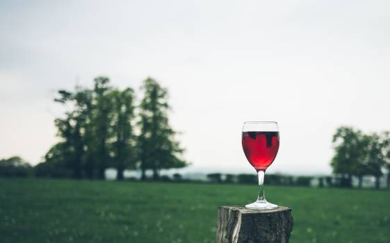 Wine Alcohol Beverage #377189