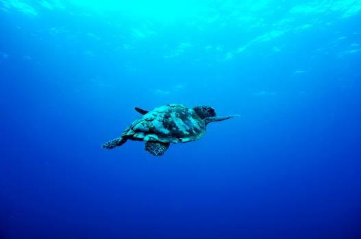 Sea Underwater Ocean #377279