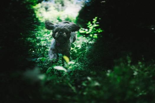 Terrier Hunting dog Dog #377411