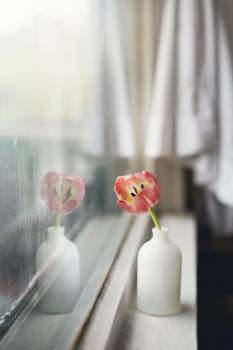 Windowsill Sill Bouquet Free Photo