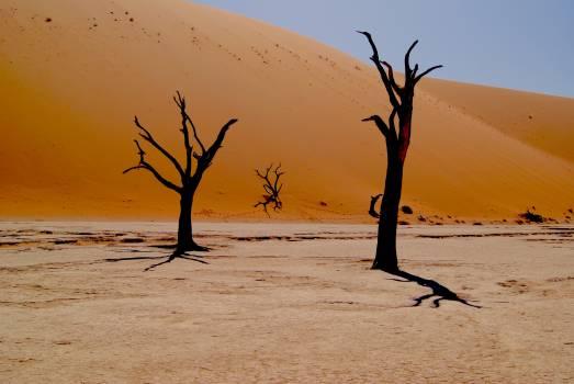 Tree Sand Beach #377964