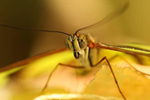 Mantis Insect Arthropod #378213