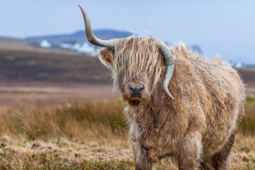 Tilt Shift Photography of Brown With Horns 4 Legged Animal at Daytime #37869