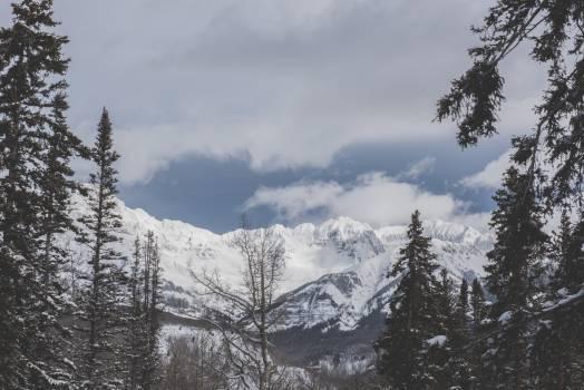 Snow Mountain Fir #378722