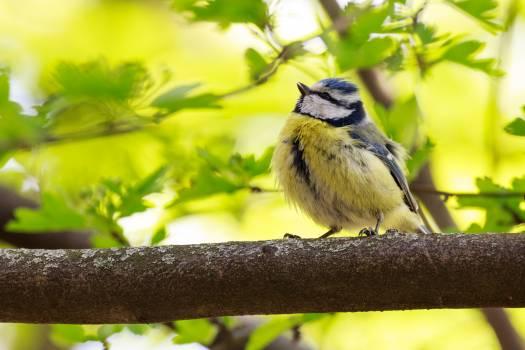 Bird summer animal blur #37882