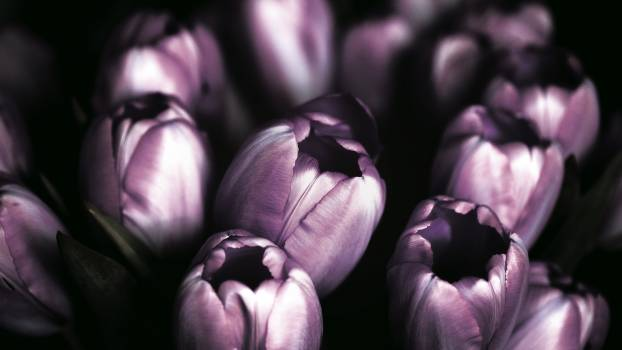 Garlic Onion Vegetable #378966