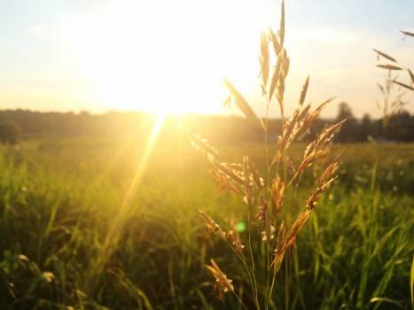 Meadow field sunny sun #37903