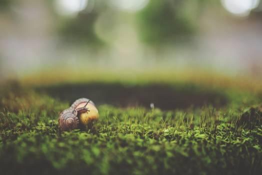 Macro Shot Photography of Brown Snail Free Photo