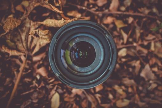 Black Camera Lens on Brown Dried Leaf Free Photo