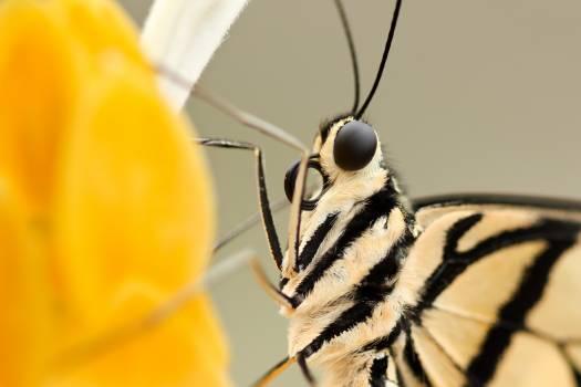 Insect Arthropod Invertebrate #379446