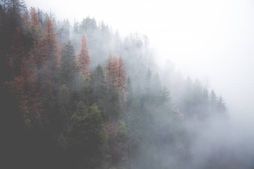 Forest misty nature trees #37972