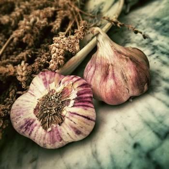Garlic Onion Vegetable #379774
