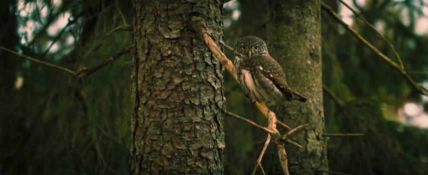 Owl Bird Wildlife #379898