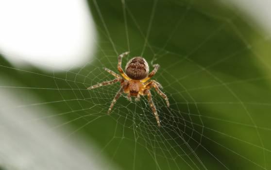 Spider web Spider Web Free Photo