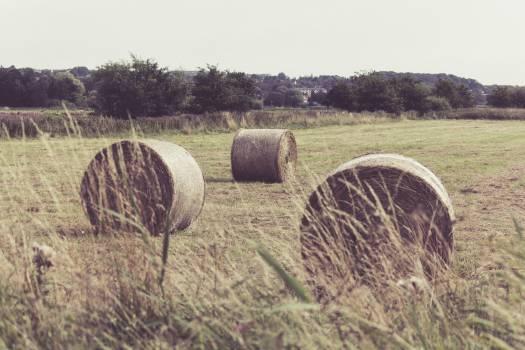 Hay Fodder Feed #379996