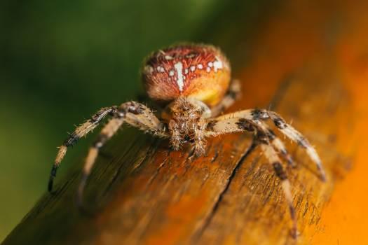 Garden spider Spider Arachnid #380063